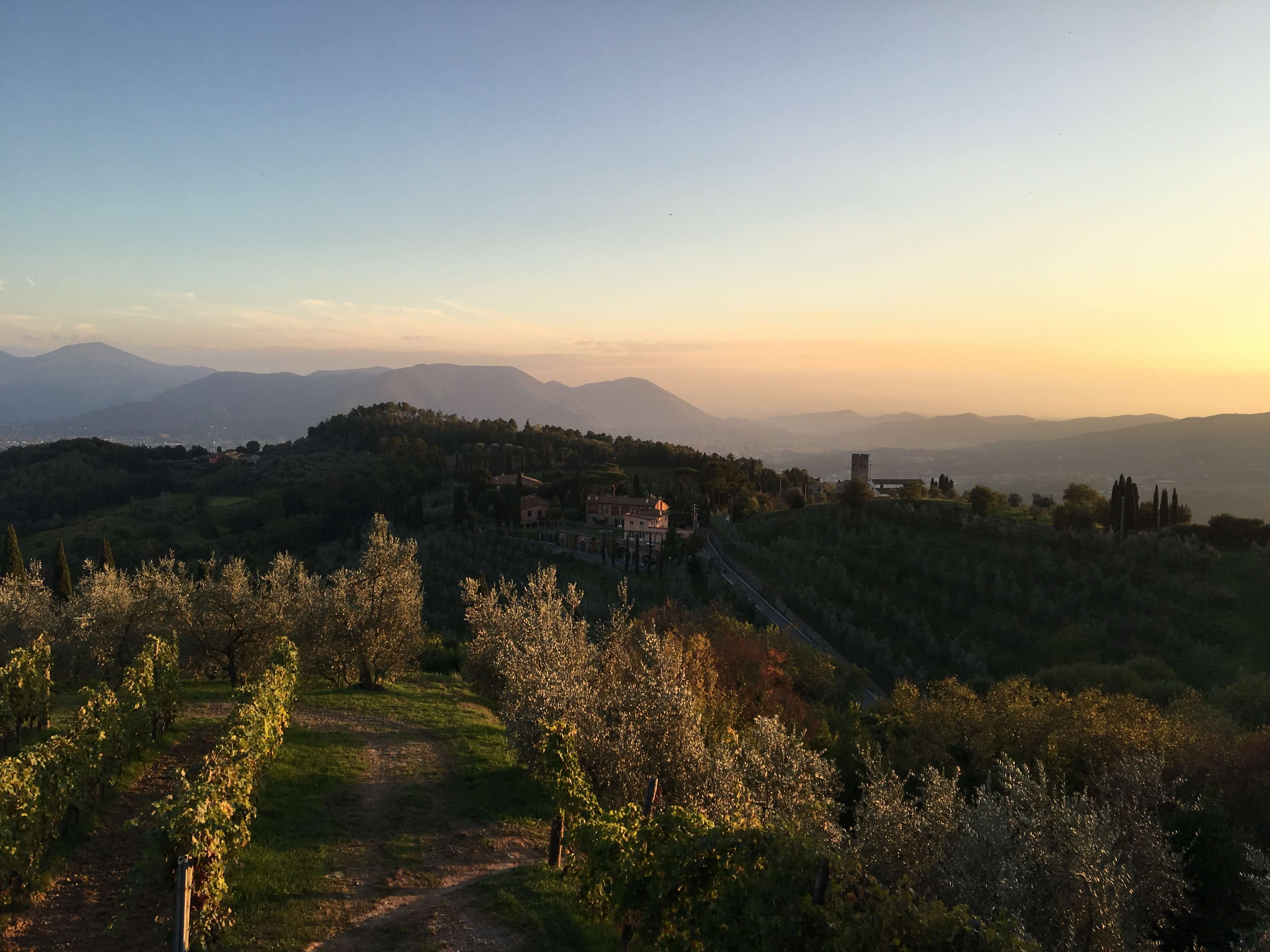 Yoga in Italy - Panorama sunset view overlooking vineyards and olive groves from our unique outdoor yoga platform